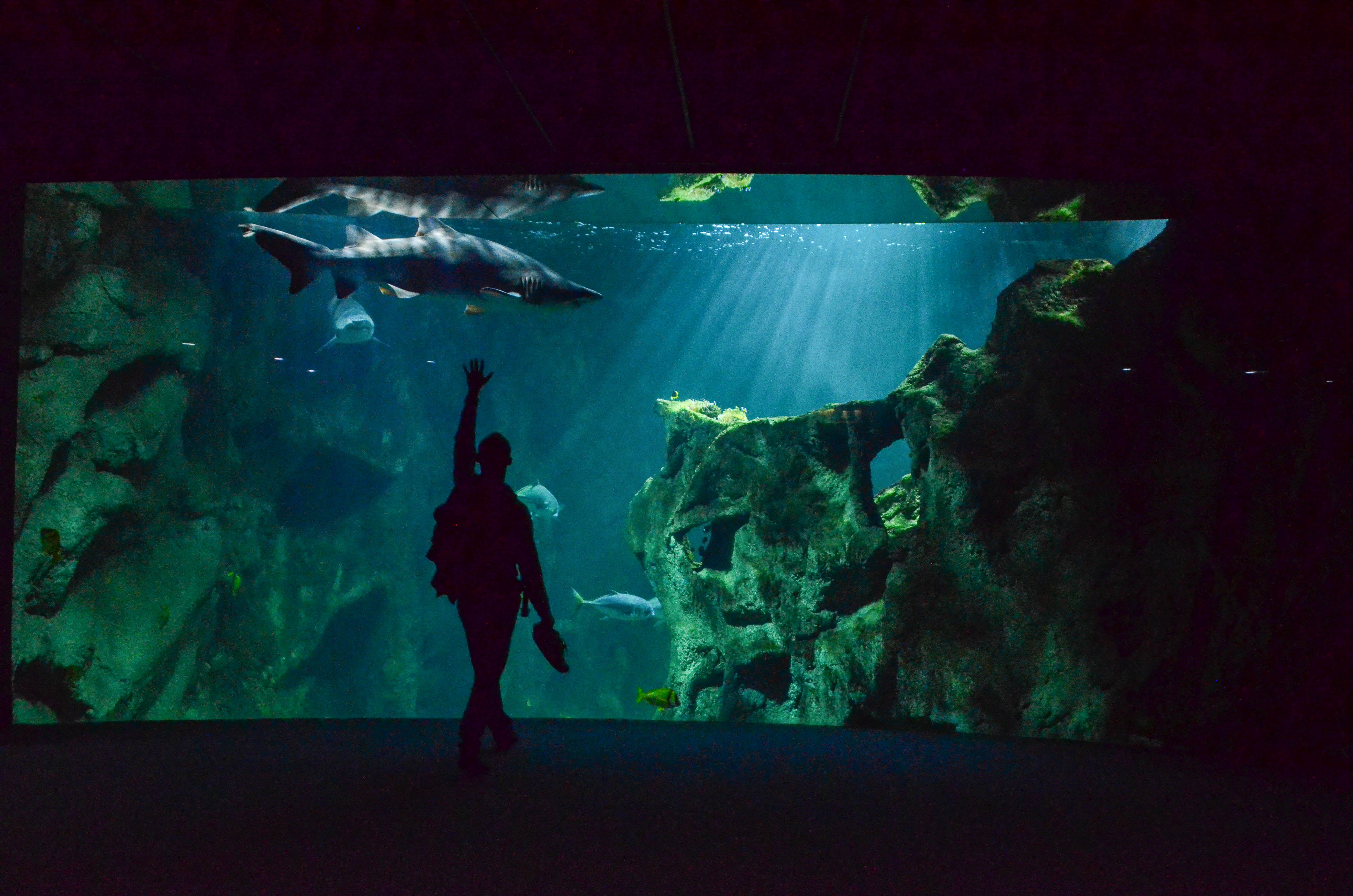 Aquarium requins la rochelle